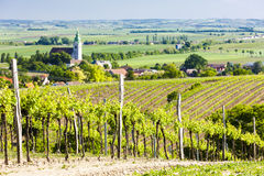 Vineyard, Austria Royalty Free Stock Image