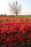 Vineyard in autumn Royalty Free Stock Photos