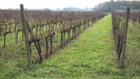 Vineyard in autumn stock video footage
