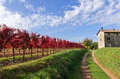 Vineyard. A vineyard in autumn after the harvest with the typical colors of this season with the nearby house of the farmers Royalty Free Stock Photo