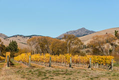 Vineyard in autumn with hills and sky Stock Images