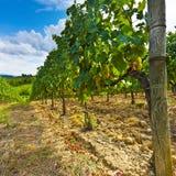 Vineyard in the Autumn Royalty Free Stock Photos