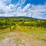 Vineyard in the Autumn Royalty Free Stock Images