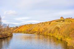 Vineyard in autumn - riversides Royalty Free Stock Photo