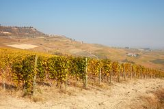 Vineyard in autumn with yellow leaves, path, hills and blue sky Royalty Free Stock Images