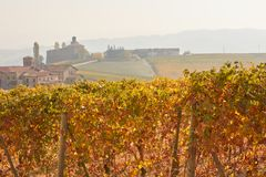 Vineyard in autumn with yellow leaves and ancient buildings Royalty Free Stock Images