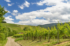 Vineyard in Baden-Baden Royalty Free Stock Photography