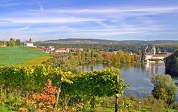 Vineyard at banks of Rhine,Switzerland Stock Photo