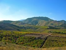 Vineyard in Banyuls sur Mer Stock Photo