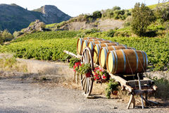 Vineyard with barrels Stock Image