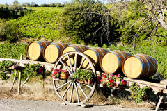 Vineyard with barrels, France Stock Images
