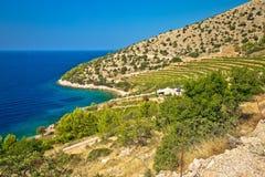 Vineyard and beach of Brac island coast Royalty Free Stock Image