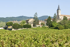 Vineyard in Beaujolais. France. Royalty Free Stock Photos
