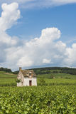 Vineyard in Beaune Royalty Free Stock Photography