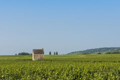 Vineyard in Beaune Royalty Free Stock Photo
