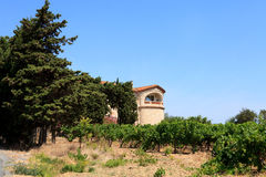 Vineyard with beautiful house Royalty Free Stock Image
