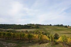 Vineyard. Beautiful image of the Vineyard royalty free stock photo
