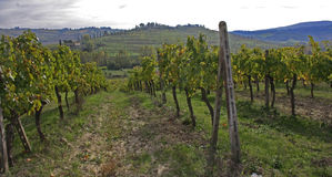 Vineyard. Beautiful image of the Vineyard royalty free stock images