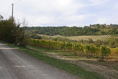Vineyard. Beautiful image of the Vineyard stock images