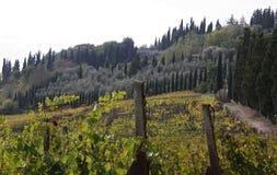 Vineyard. Beautiful image of the Vineyard stock image