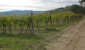 Vineyard. Beautiful image of the Vineyard royalty free stock image