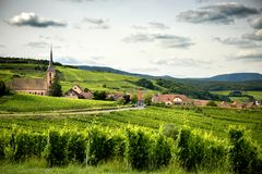 Landscape of vineyards in Alsace. France. Vineyard at the beginning of the country, on the wine road. Alsace France Stock Image