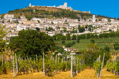 Vineyard Bellow Rocca Maggiore in Umbria, Assisi During a Hot Su Royalty Free Stock Photography