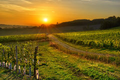 Vineyard Bergerac three. Sunrise over a vineyard in the south west of France, Bergerac Royalty Free Stock Photo