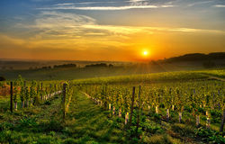 Vineyard Bergerac two Stock Photography