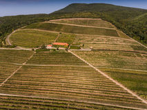 Vineyard from bird eye view Stock Photography
