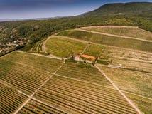 Vineyard from bird eye view Stock Image