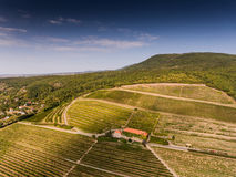 Vineyard from bird eye view Stock Images