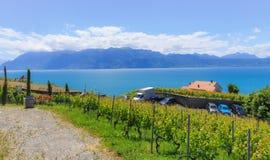 Vineyard and blue Leman lake. Switzerland, Lavaux village, lake Leman, vineyard and beautiful blue lake Royalty Free Stock Photos