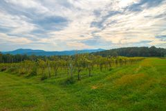 Vineyard in the Blue Ridge Mountains on a beautiful Cloudy Day. royalty free stock photography