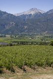Vineyard in Bolson, Argentina Royalty Free Stock Photography