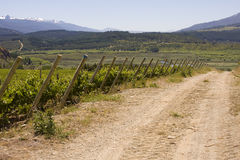 Vineyard in Bolson, Argentina (path at the side) Stock Photos