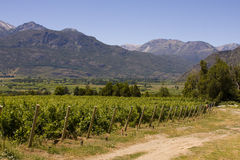 Vineyard in Bolson, Argentina (side path) Royalty Free Stock Image