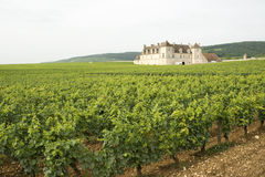 Vineyard, Bourgogne Burgundy. Stock Photos