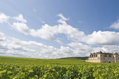 Vineyard in Bourgogne, Burgundy Stock Photography