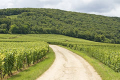 Vineyard in Bourgogne, Burgundy Royalty Free Stock Images