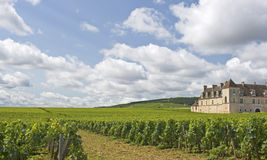 Vineyard in Bourgogne, Burgundy Royalty Free Stock Photo