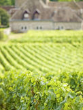 Vineyard, Bourgogne Burgundy. Stock Photo