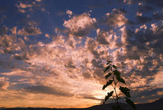 Vineyard branch sunrise. Vineyard branch silhouette with sunrise background royalty free stock photo