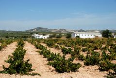 Vineyard and buildings, Montilla. View across a Spanish vineyard with a farmhouse to the rear, Montilla, Cordoba Province, Andalusia, Spain, Western Europe stock photo