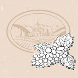 Vineyard and Bunch of Grapes, Background Design Stock Photography