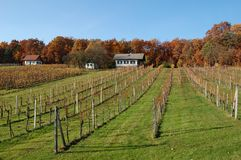 Vineyard in Burgerland, Austria Royalty Free Stock Photography