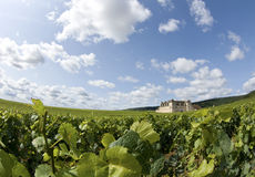 Vineyard in Burgundy, Bourgogne. France. Vineyard in Burgundy, vine fields at Cote de Nuits. Bourgogne. France royalty free stock photos