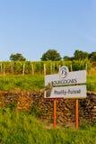Vineyard, Burgundy, France Stock Photos