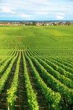 Vineyard in Burgundy region of France Stock Photos