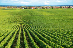 Vineyard in Burgundy region of France Royalty Free Stock Photography